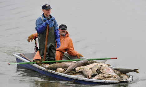 German lake full of dead carp baffles officials