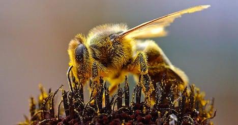 Winter bee loss stabilizes in Switzerland: report