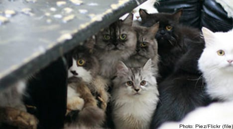 Suspected cat killer arrested in Gothenburg