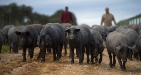 Spain's star ham fights for greater prestige