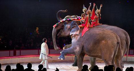 Senator slams circus use of endangered elephants