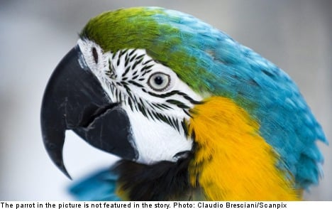 Sweden hit by outbreak of rare parrot fever