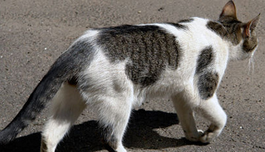 €2,000 bounty for 'meatballs' cat killer
