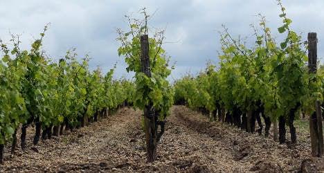 Burgundy vineyards face 'catastrophe' after storms