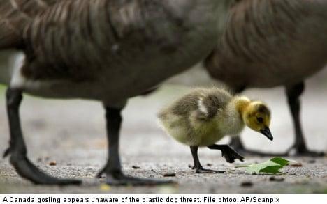 US plastic dogs to combat goose menace