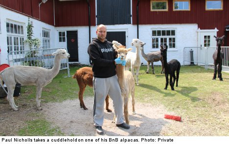Londoner all woolly inside for B&B alpacas