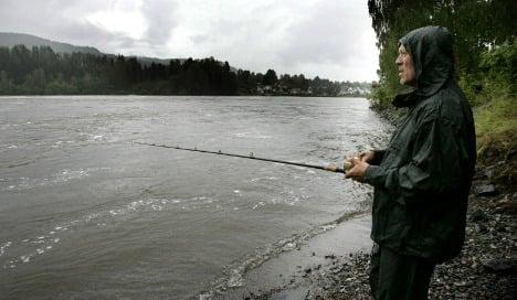 Fish farms blamed for wild salmon decline