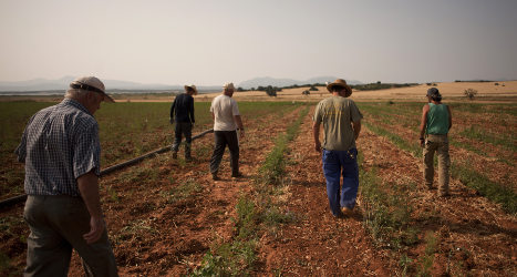 Jobless dig for work in Spain's farmland