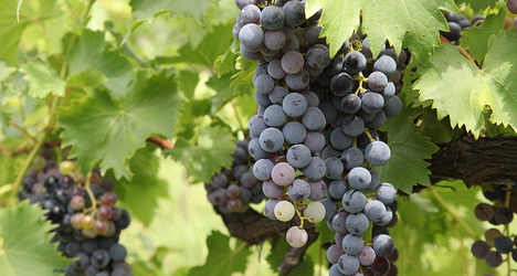 Bogus branding leads to wine kit seizure