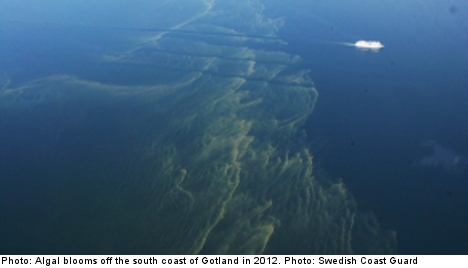 Algal blooms appear in southern Baltic Sea