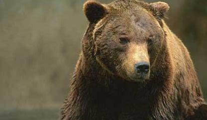 Bear slaughtered at Italian national park