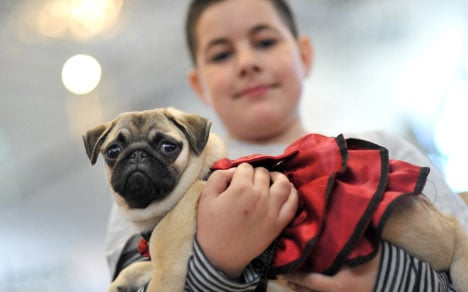 Pet pals 'crucial' for kids – and adults – in Germany