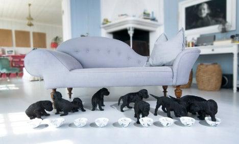 Norway royals welcome nine labradoodles
