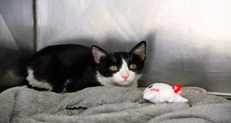 Stowaway cat survives flight from Athens