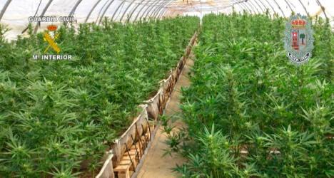 Police smoke out mega marijuana plantation