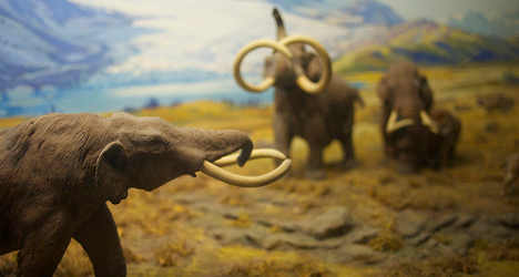 Million-year-old mammoth found in Italy
