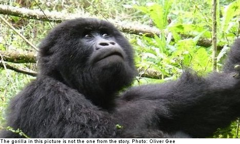 Gorilla stones Swedish woman in zoo ambush