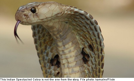 Cobra bite victim allowed to keep 40 snakes