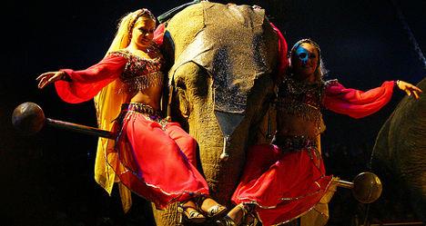 'How can you ban circus elephants but not bulls?'