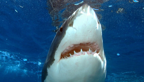 Shark bites off German swimmer's arm