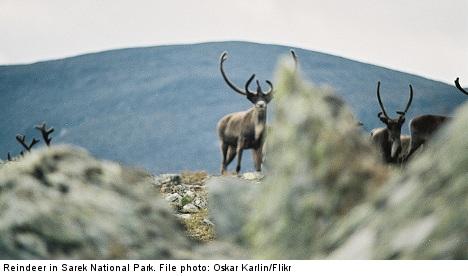 Nat Geo fights Swedish reindeer helicopter ban