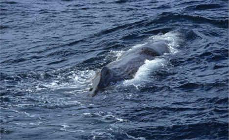 Sperm whale freed from Bergen bay