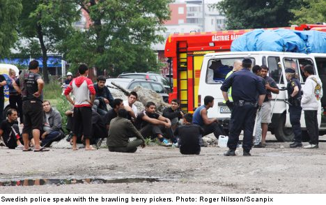Huge berry picker brawl sends six to hospital