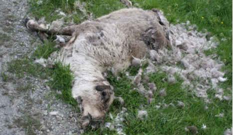 'Reindeer were murdered to scare my children'