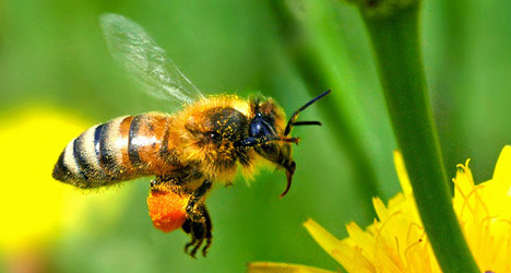Metal detector bees give gold mine green light