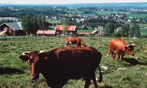 Norway farmers world's most subsidised: OECD