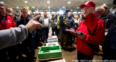 Prices plunge in season's first lobster haul