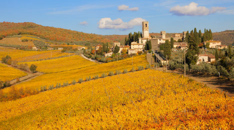 Recession-hit Italians return to vineyards