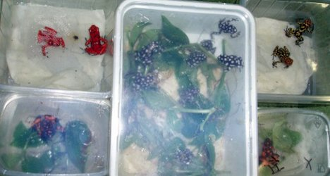 Rare frogs seized in taxi at Swiss border