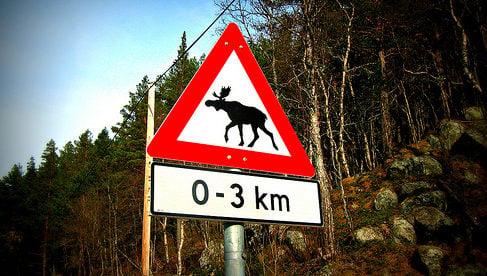 Norway plans 'disco poles' to scare off elk
