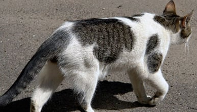 Cat massacre continues to blight Capri