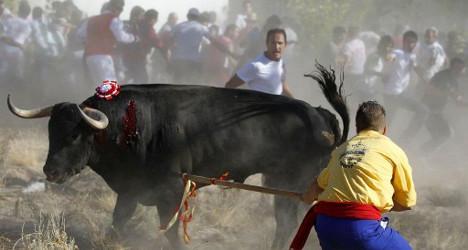 Spain votes on future of 'sadistic' bull festival