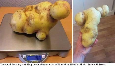 Swede's 'Titanic' potato mashes size record