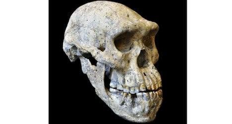 Skull leads Zurich boffins to 'rewrite' history of man
