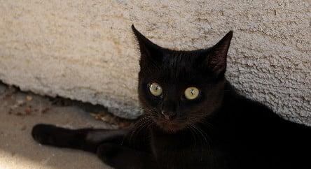 Landlord finds 20 dead black cats in freezer
