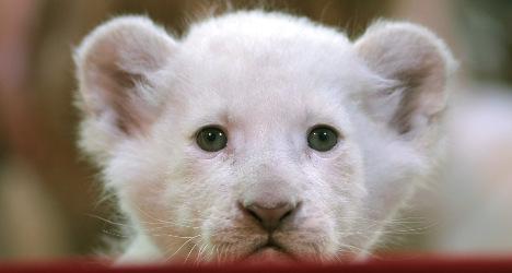 Animal-loving Catalans back circus animal ban