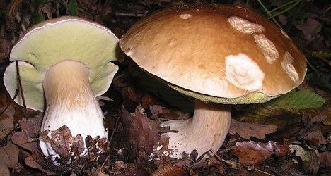 Mushroom pickers die from falls in Ticino