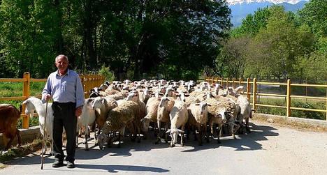 Bulgaria's 'shepherd scammer' seized in Spain