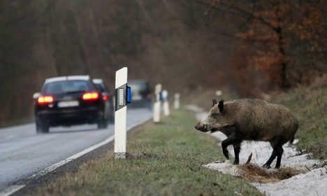 Wild animal road crashes cost €500 million