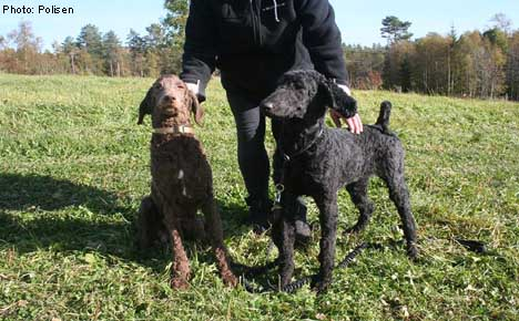 Swedish police sell poodles on Facebook