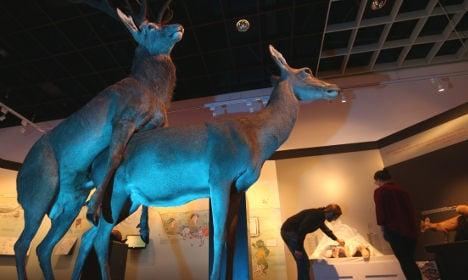 Museum opens risqué animal sex exhibition