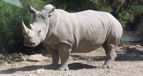 Spanish zoo hails rare white rhino birth
