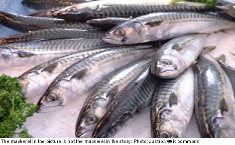 Woman batters sleepy Swede with mackerel