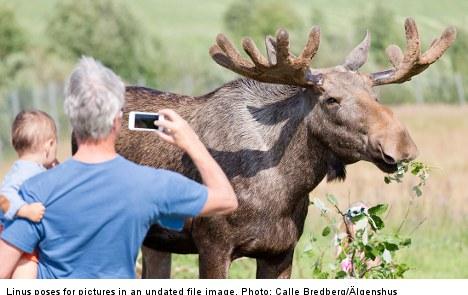 Linus the dead elk sparks legal spat in Sweden