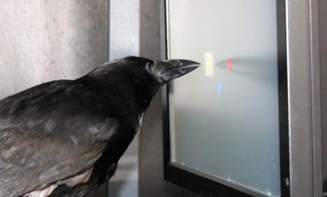 Bird brains 'can solve monkey puzzles'