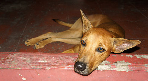 Woman locked dog in bathroom until it died